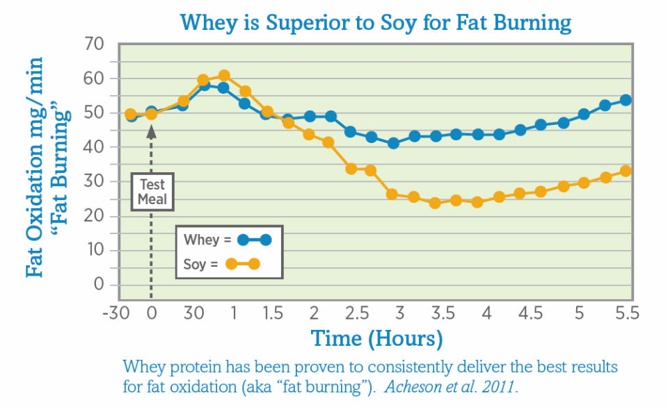 Whey vs Soy for Fat Burning