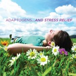 Adapt Yourself: Adaptogens and Stress Relief