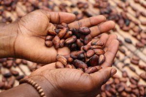 Person holding cocoa beans
