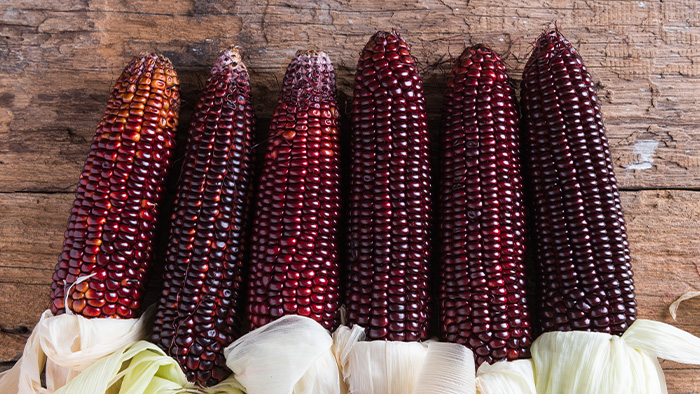 organic purple corn