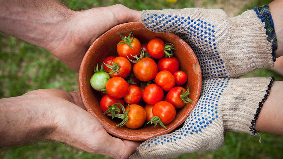 Two sets of hands holding a bowl of fresh tomatoes