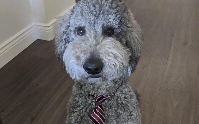 Stephanie M.'s dog, Koda