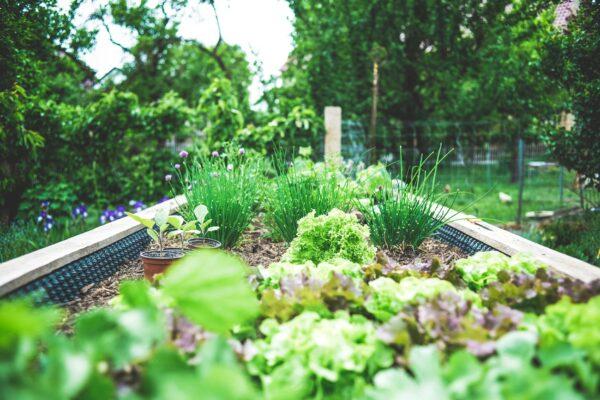 Sustainability - Backyard Garden