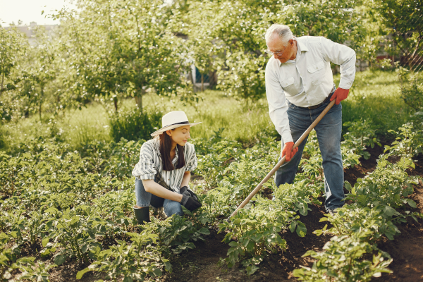 Older father farming with his adult daughter